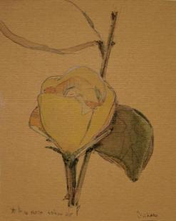 A yellow rose. watercolor on paper