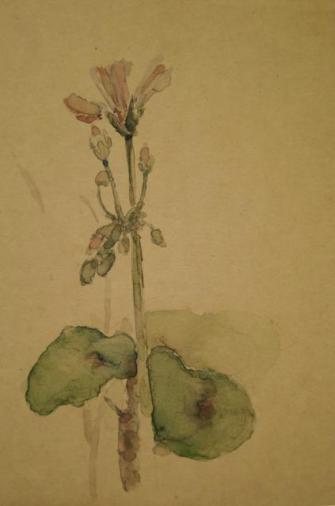 Malva flower