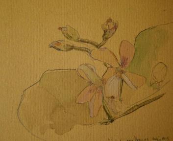 Malva. Watercolors on paper