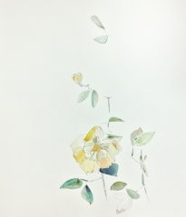 A picked yellow flower