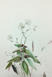 Tree flowers of a bridal veil