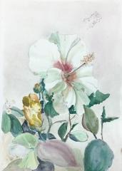 Hibiscus from Hanoi